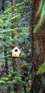 Another impromptue piece of art; Birdhouse cutout on a tree branch at Bowen Park.
