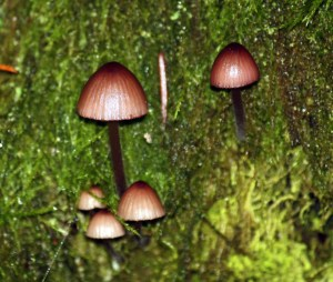 Fairy mushrooms, no taller than a pine needle.