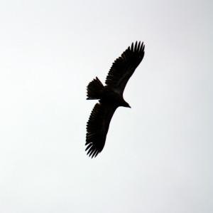Eagles soaring lazily overhead!
