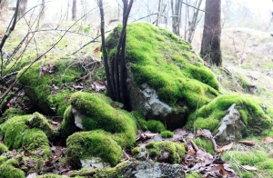 Moss and Lichens growing profusely...