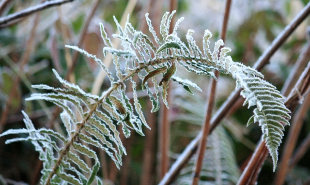 Every leaf on each frond carefully outlined in frost!