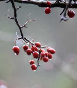Berries and branches were dripping with water.