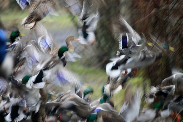 Well, this is probably not a good photograph in that it lacks focus;  But oh I love the motion in it!
