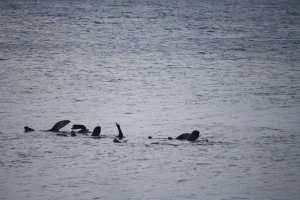 Sea lions lolling around in Bay.