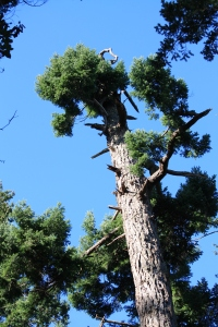 Tree tops, blue sky, how perfect is that.