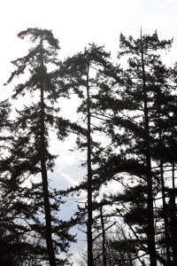 Shadows dancing through the trees.