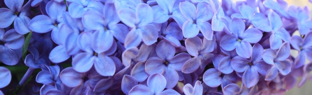 I love the lilacs of spring