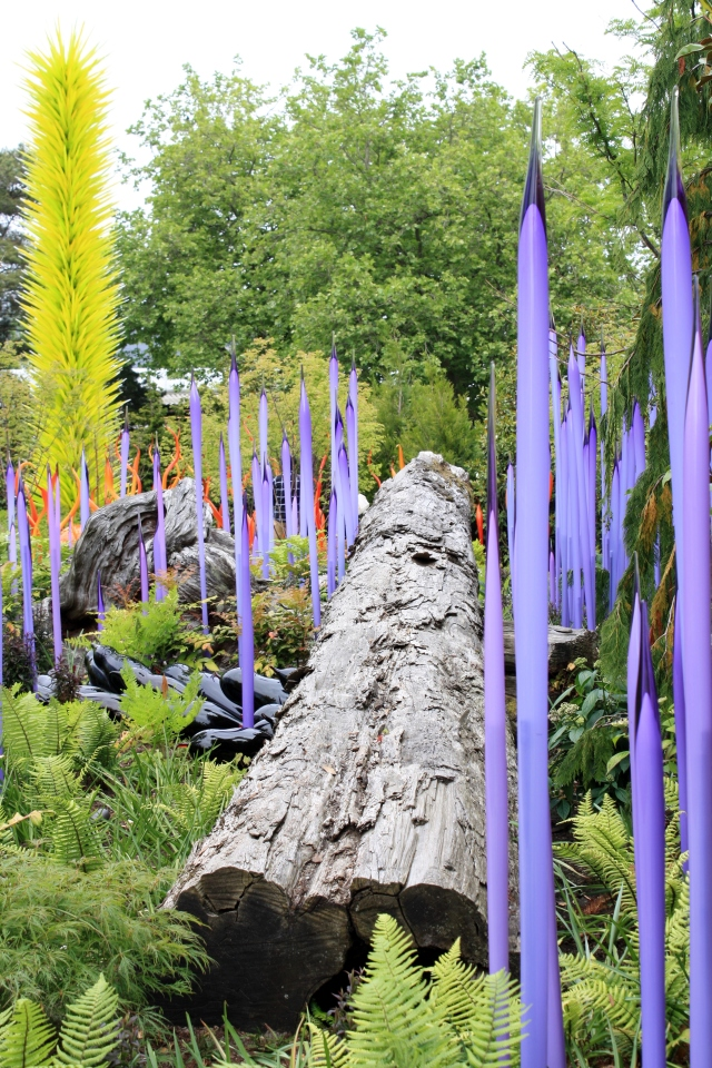 My Favorite view at the Chihuly Glass Gardens!  Pansys, Ferns and weathered wood.  To m ethe perfect combination of elements and colours.  Notice the purple spires, fabulous!