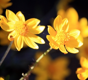 Hot flowers glowing in the sun.
