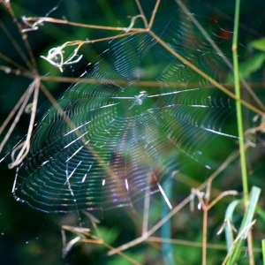 A rainbow caught in a Spider's web.  Sunshine and breeze working to showcase a small piece of natures art.