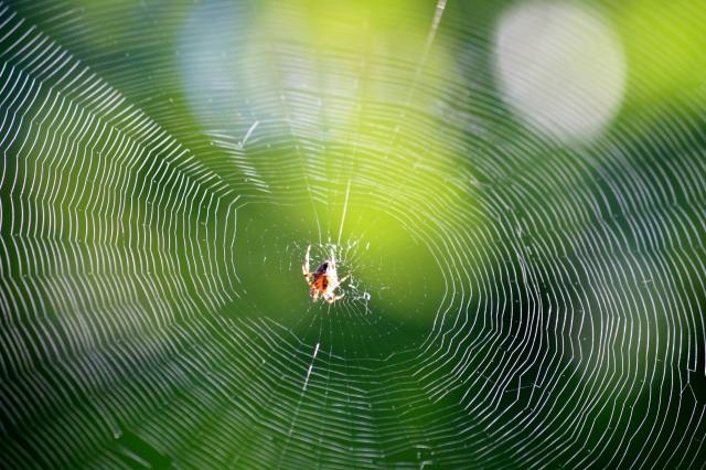 Amazing Spider's Web