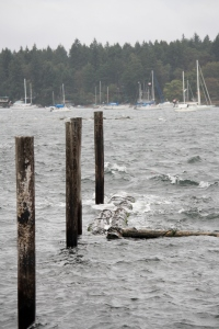 Choppy waves cut at the shoreline and yacht club breakwater!
