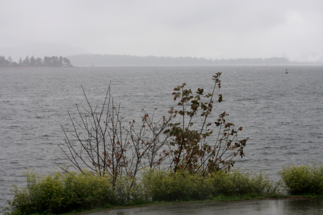 Nanaimo Harbour in the rain.