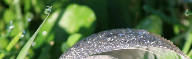 Iridescent Dew drops on a Gull Feather.