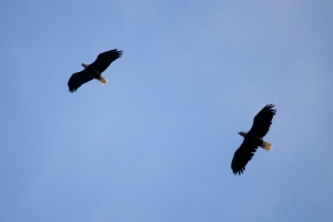 Eagles soaring above us as we walked.
