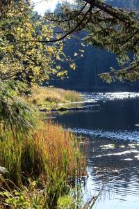 Cottle Lake
