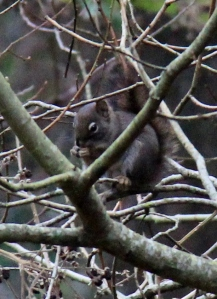 Much higher resolution leads to much better details on the cropped distance shots.  Love this brown squirrel.