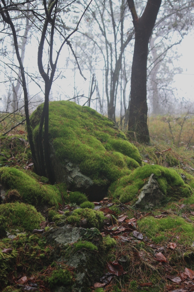 Lichen covered boulders looking cushiony in the fey fog.
