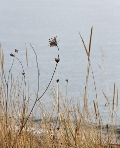 Love the details and contrast of dried grass and ocean.