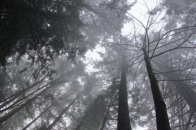 Fog shrouded canopy overhead.