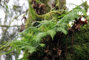 Lush ferns adorn the earth and trunks on high.