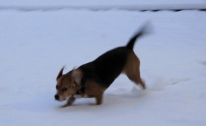 Sophie playing in the snow.