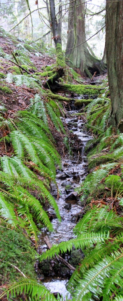 A singing Rill of water streams down through the ferns and tree trunks at Morrell.