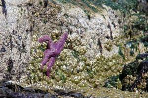 Sea stars and anemones!