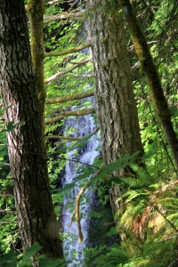 Glimpses of falling water through the trees.