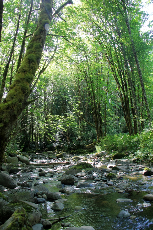 Classic West Coast Creek - Holland Creek.