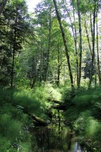 Lazy, overgrown side stream for Salmon Enhancement.