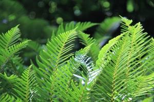 Lush ferns at eyelevel as we climbed up and up.