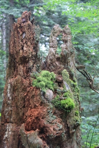 Here there is another world - everything in miniature built on a mountain of a rotting tree trunk.