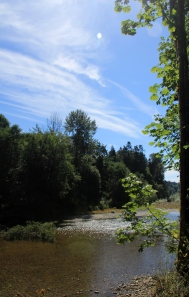 The River was sparking in the Sun.  Small leaves were drifting down  and the skies were so blue!
