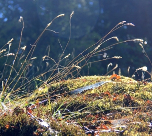 Grasses and Mosses starting to dry out in the hot sun.