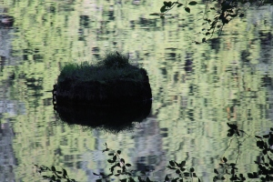 Green on Green - watery reflections,