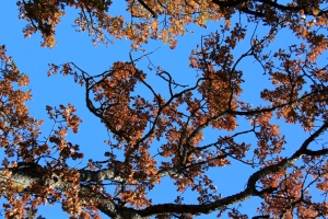 Clear blue skies and Autumn tones leaves - beautiful inspiration.