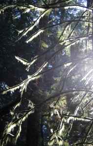 The Moss was beautiful, hanging and glowing through the branches of the trees.