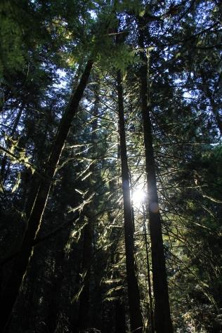 Through the trees.