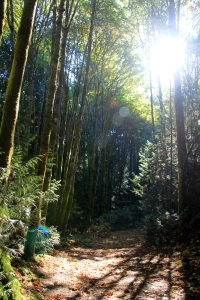 Sunlight pouring down through the leaves and onto the trail.