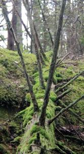 Radiating moss
