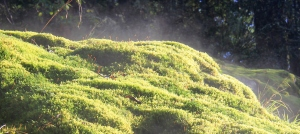 The mossy grounds around were steaming in the sun!