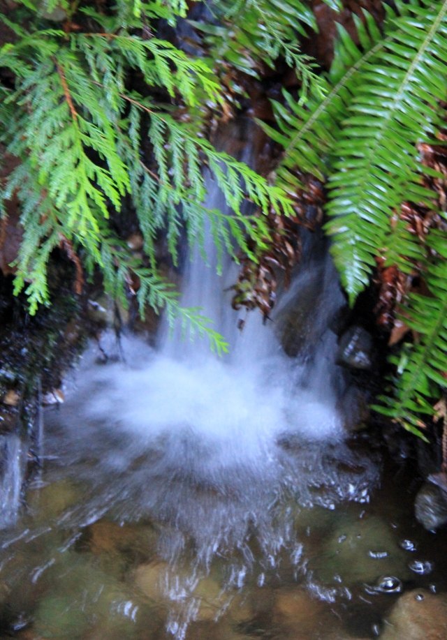 After all the rain in the last few days - water is cascading everywhere!