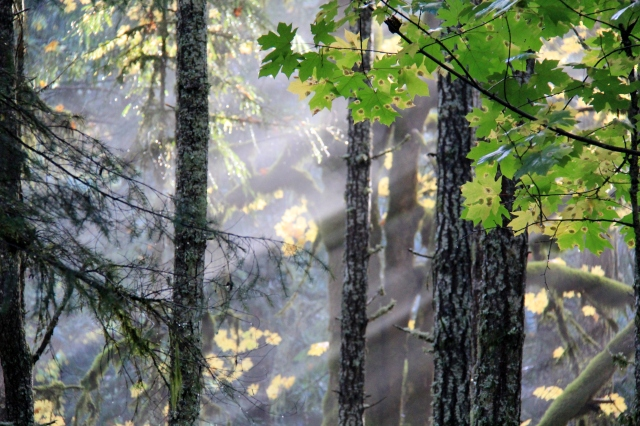 Mist and light through the trees!