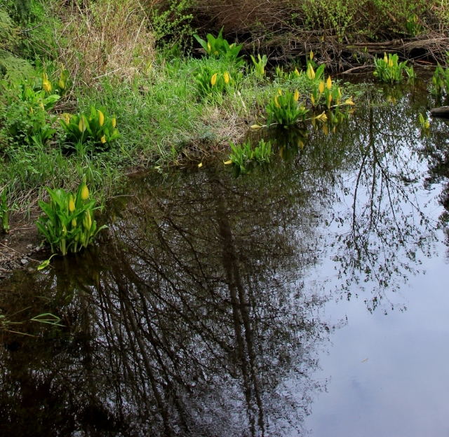 Woodland reflections in the flowing waters.